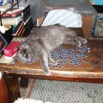 Cat on a puzzle