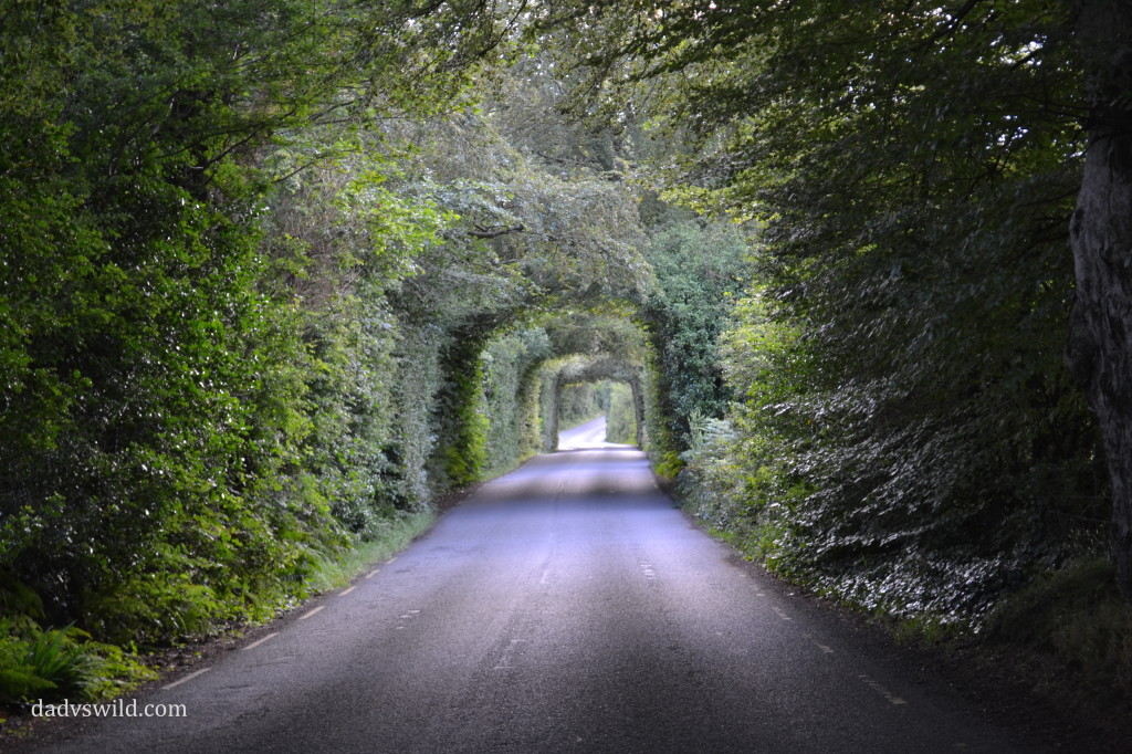 ireland plant tunnel